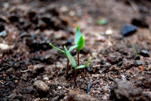 seedling-1345250-639x424
